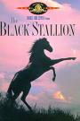 BLACK STALLION, THE
